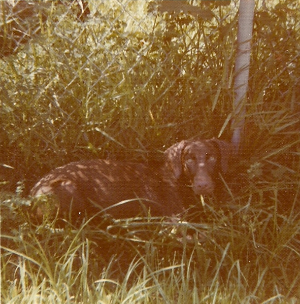 Ginger hiding in the grass..