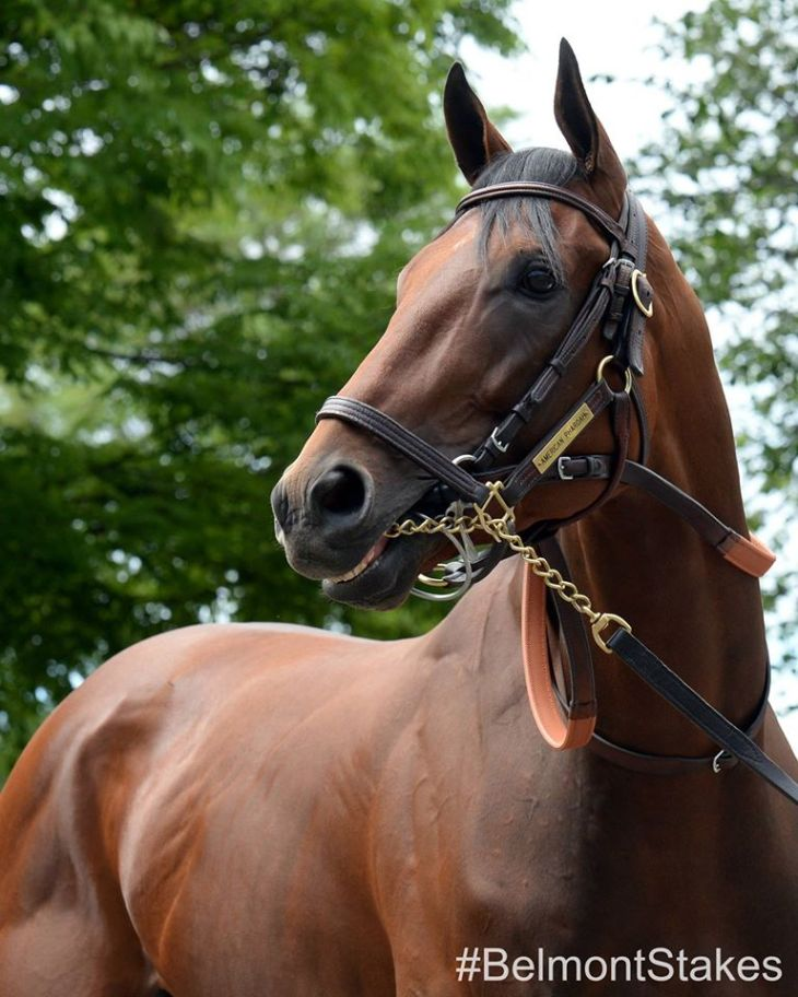American Pharoah, the 12th Triple Crown winner in American horse racing history.